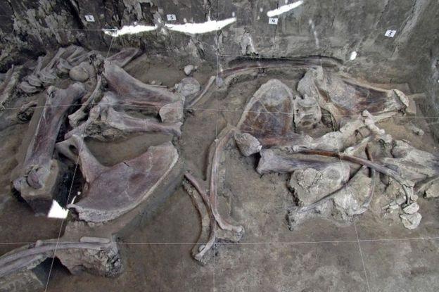 На некоторых костях видны следы воздействия человека