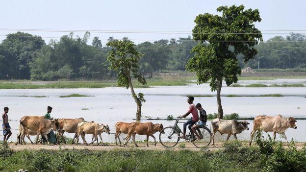 Campo en India