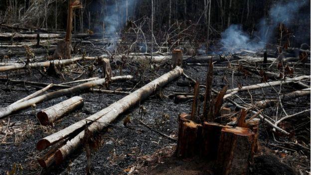 Troncos quemados en el Amazonas.