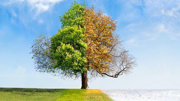 Árvore em diferentes estações do ano
