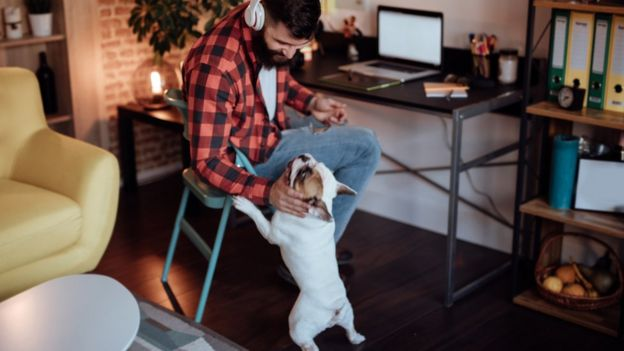 Hombre trabajando en su casa acariciando un perro.