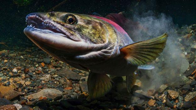 Um peixe dentro d'água e perto do solo repleto de pedras