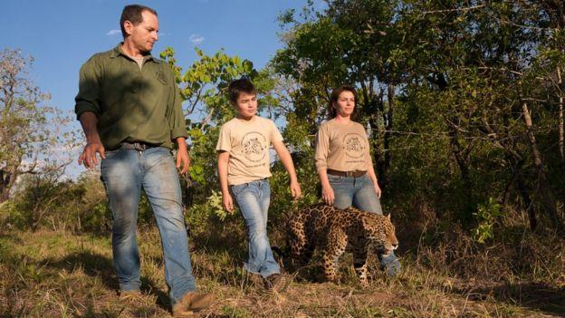 Tiago camina con sus padres y un jaguar.