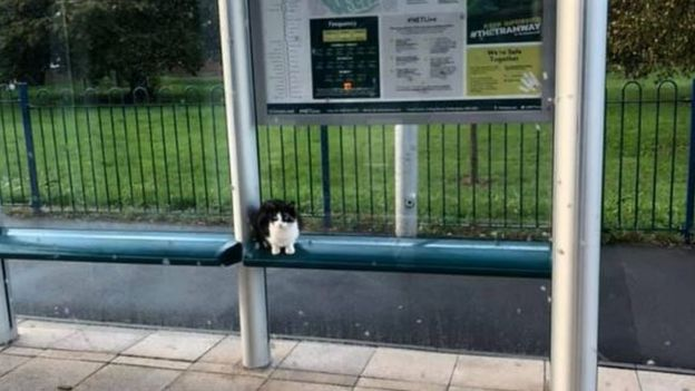 The commuter cats who became fur-mous _109568028_benson