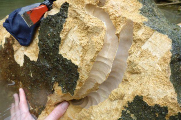 Rocas con los agujeros donde se encontraban los moluscos