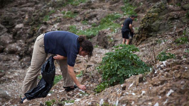 Conservacionistas recogiendo bandas elásticas y otros objetos en el terreno en Mullion