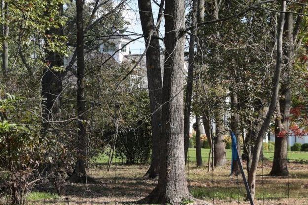 Лес вокруг дома Сороса
