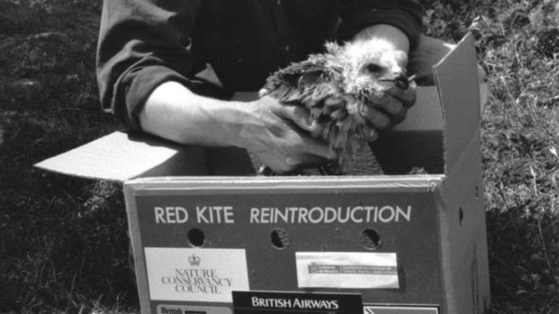 Red kite in a box