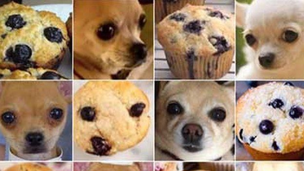 Muffins and chihuahuas side by side