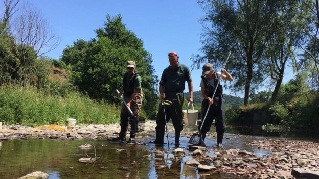 Ambientalista capturando peixes