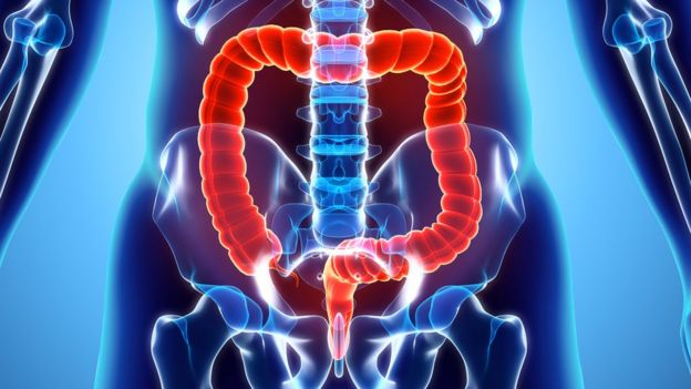 Ilustración de los intestinos y colon