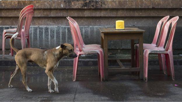 Perro caminando al lado de mesas callejeras