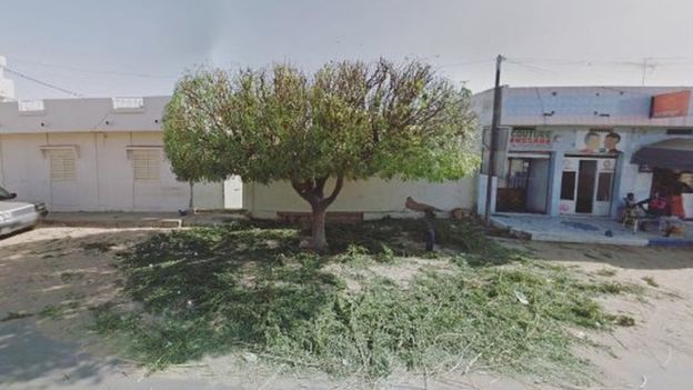 Un árbol en una plaza en Senegal.