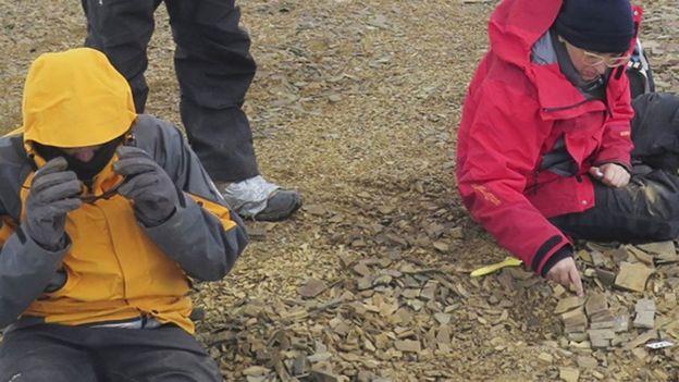 Paleontólogos trabajando. Foto: gentileza Instituto Antártico Argentino.