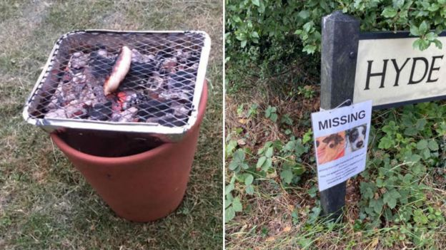 Barbecue and missing dogs poster