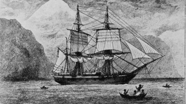Beagle gemisi