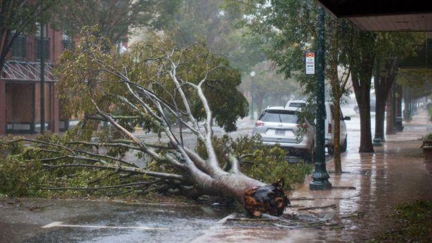 شجرة تسبب الإعصار في قطعها