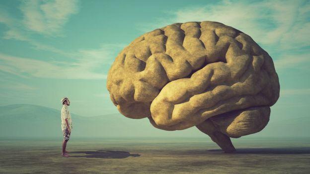 Hombre mira a una ilustración de un cerebro grande.
