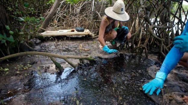 Isabel Sant'Ana trabalha agachada em mangue
