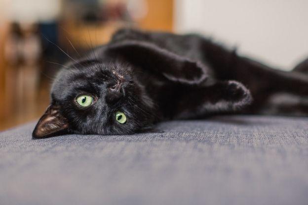 crna mačka
