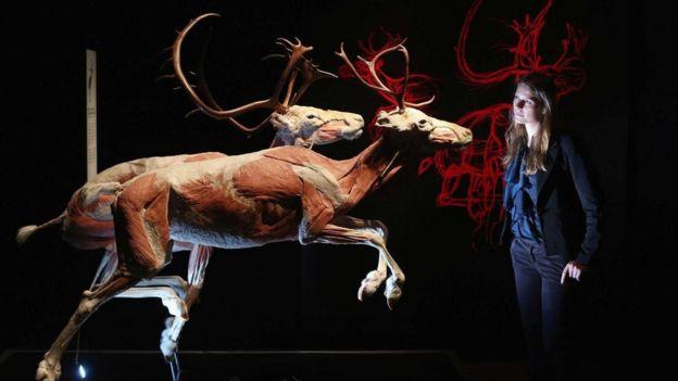 يقدر العلماء متوسط عمر أنواع الثدييات، من نشأتها حتى انقراضها، بنحو مليون عام، فهل يمكن أن يخالف البشر هذه التوقعات؟