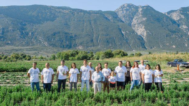 Members of the Stevia Hellas Cooperative