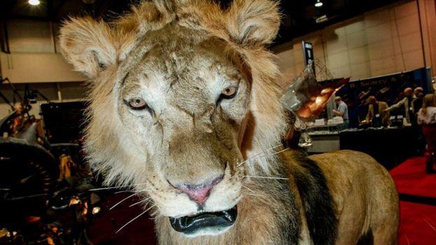 Leão empalhado em Nevada