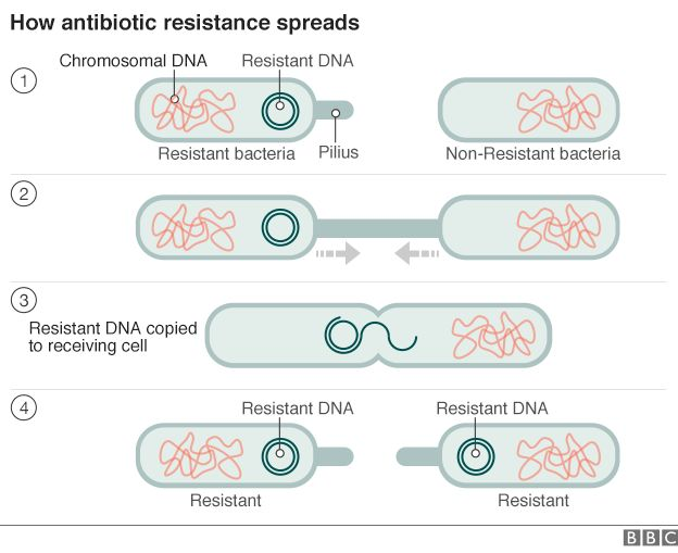How resistance spreads