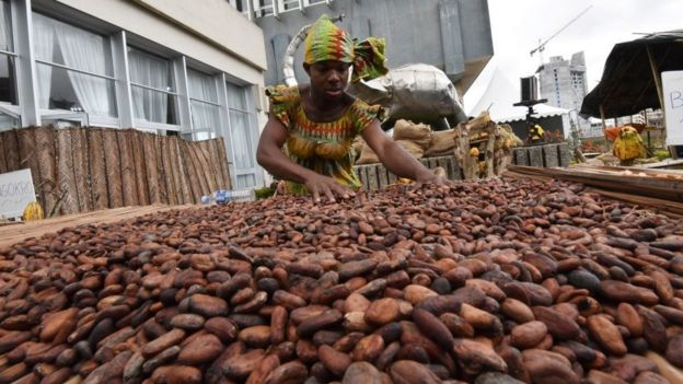 Woman with cocoa beans.