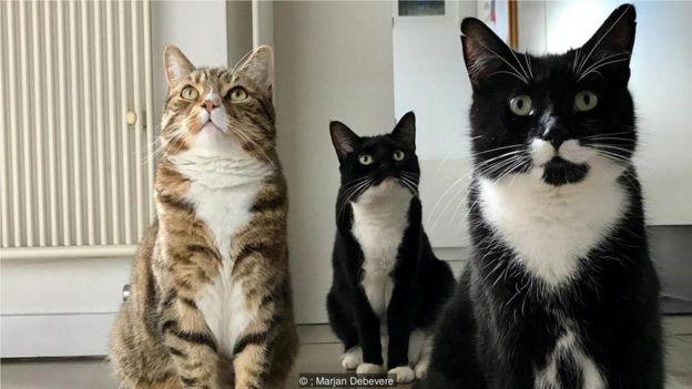 代贝维尔(Marjan Debevere)说以她的经验,没有哪两只猫呜呜叫得一样。