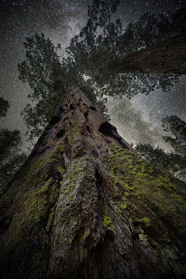 Árvore fotografada por Beth Moon