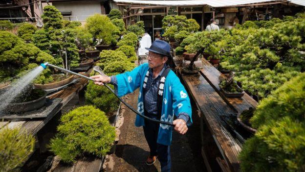 Pohon Bonsai Berusia 400 Tahun Telah Dicuri, Nilainya Rp1,2 Miliar