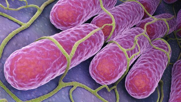 Ilustração da salmonela