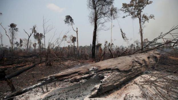 Área da floresta amazônica queimada