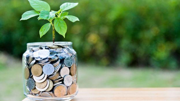 Una planta crece en un jarro lleno de monedas