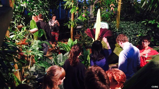 Queues of people looking at the titan arum