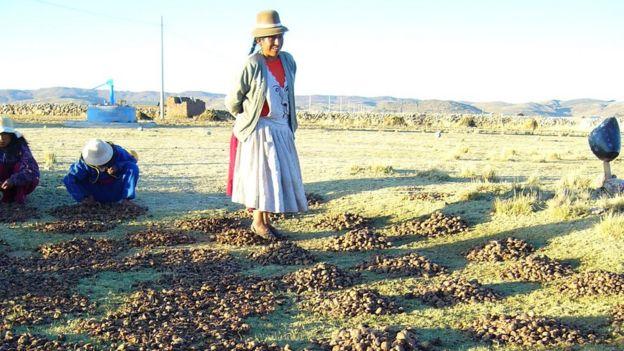 Mujer pisando tunta en Ilave, Puno, Perú, 2008