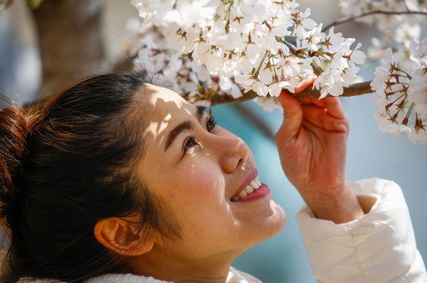 对转瞬即逝之美的欣赏体现在日本一些最简单的快乐中,比如每年一度的赏樱。