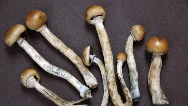 Hongos alucinógenos colombianos