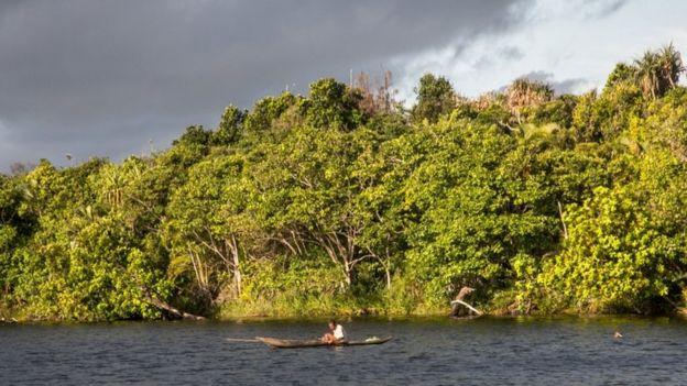Bosque primario en Madagascar.