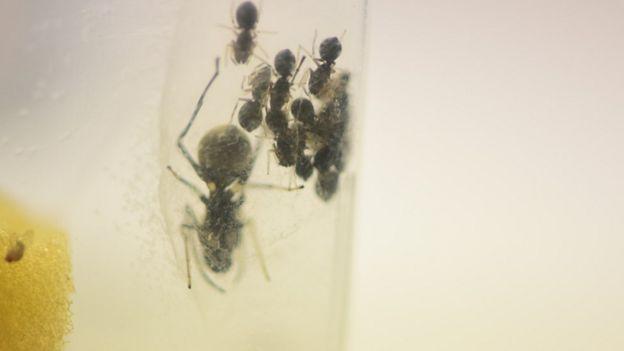Aranha e filhotes no laboratório