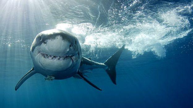 Un tiburón en el agua.