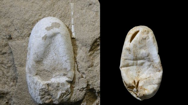 Ovo do pterossauro ao lado de um ovo de cobra, mostrando que ambos têm casca mole