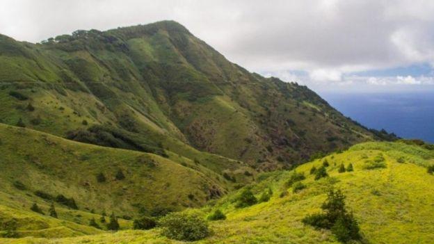 La Montaña Verde es un ecosistema hecho por el hombre donde las especies introducidas y las plantas nativas evolucionaron juntas.