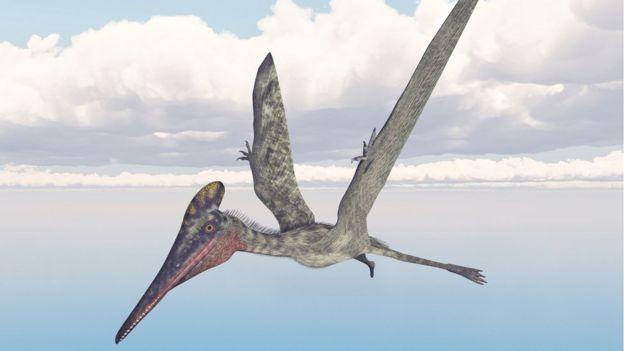 Ilustração de pterossauro