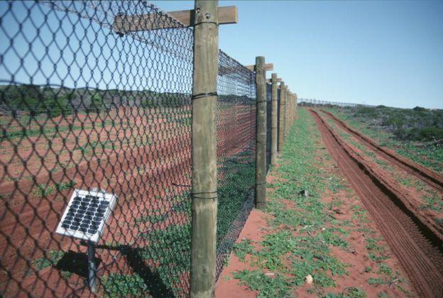 Противокошачий электрический барьер на солнечных батареях