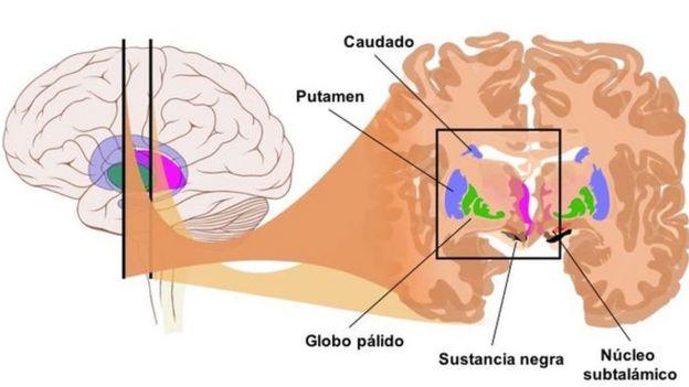 Esquema de las zonas del cerebro donde se almacena la información requerida para conducir.