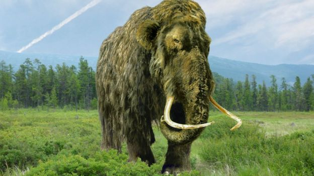 Woolly mammoth carved tusk auctioned in Northamptonshire