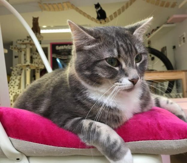 Are cat cafes good for cats? - BBC News