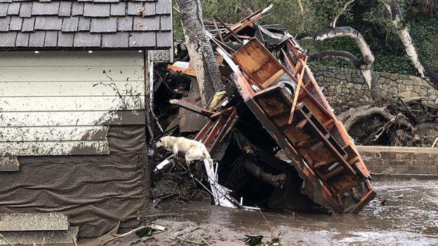 Un perro de rescate entra en una casa afectada por los deslaves